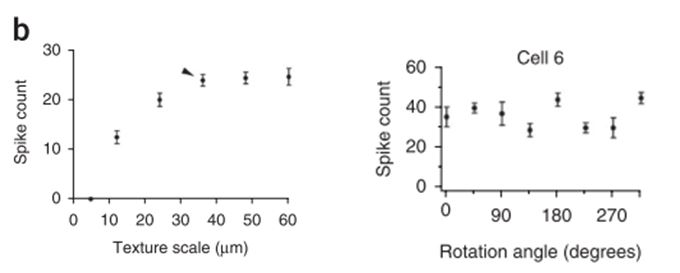 Figure 1. On-Alpha-like RGCs respond non-linearly to different texture stimuli and showed responses to rotation of the stimuli, characteristic of heterogeneity