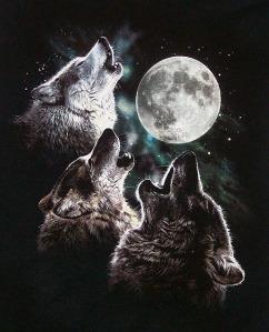 3wolfmoon_7785