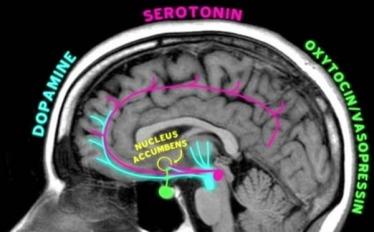 Brain in love