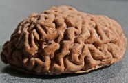 chocolate brain