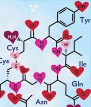oxytocinsmall
