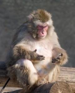 MonkeyCounting3