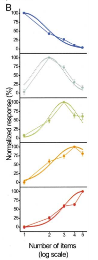 The graphs show firing rates for neurons with varying numerosity preferences. For example, in the second graph from the top, the neurons preferring 2 items fired far more when the monkey saw 2 dots, next most when he saw 3 dots, and next most for 1 dot. Reproduced from Miller & Nieder [3].