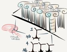 corticalcolumns