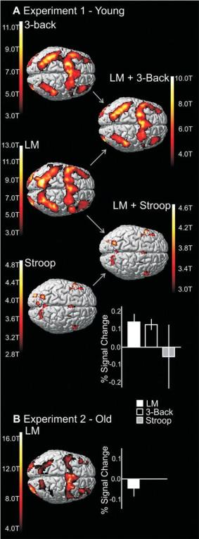 Figure 3. The brains in the left column show activity in the brain during the performance of the 3 tasks in this experiment. The LM task (middle)  was practiced while the  3-back task (top) was the task that showed the transfer of the increase in performance. The Stroop task (bottom) did not show this transfer of the performance increase. The right column shows the overlap of the brain activation in the tasks, demonstrating far greater overlap of brain regions in the 3-Back & LM (successful transfer) rather than Stroop & LM (no transfer).
