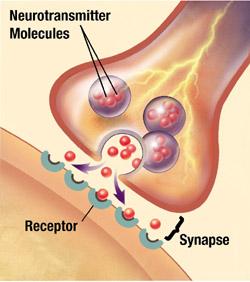 synapse-thumb-250x282-94568