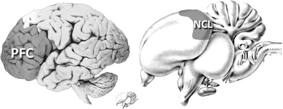 From the outside, human and bird brains look quite different. But when you consider their developmental and evolutionary trajectories, they are actually quite similar.