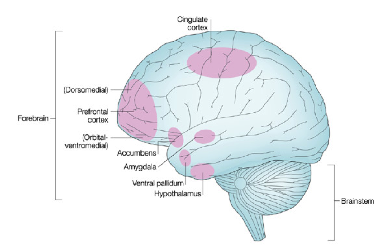 Emotion Brain Diagram - Block And Schematic Diagrams •