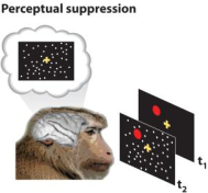 perceptual-suppression