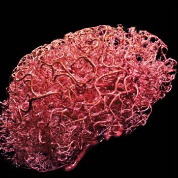 blood-cerevellum