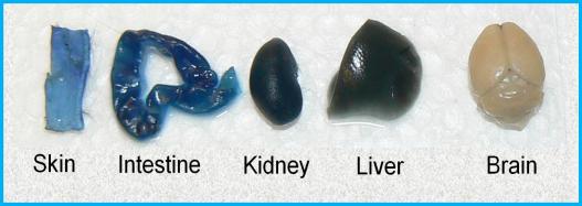 blue-dye