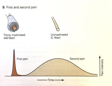 first-and-second-pain