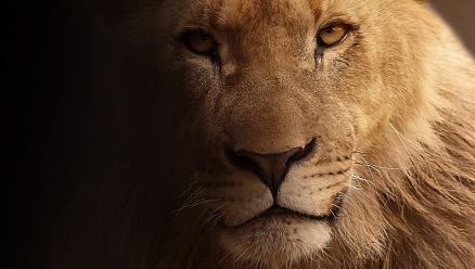 lion-617365_1920