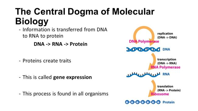 central_dogma