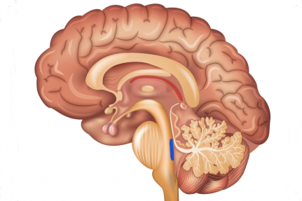 Brain_Locus_Coeruleus-1200x800-copy3-824x549